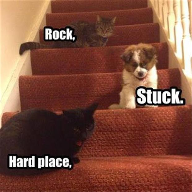 funny-cats-and-dogs1