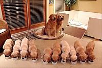 proud-dog-parents-puppies-dog-family- 2