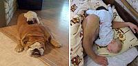 dudes-and-dogs-sleeping-4